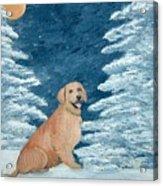Midnight Snow Acrylic Print