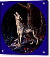 Midnight Wolf Acrylic Print
