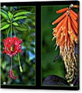 Midsummer Dream Diptych Acrylic Print