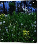 Midsummer Night's Magic Acrylic Print