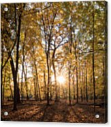 Midwest Forest Acrylic Print