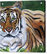 Mighty Bengal Acrylic Print