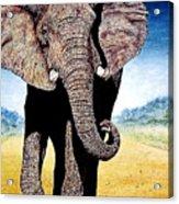 Mighty Elephant Acrylic Print