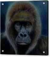 Mighty Gorilla Acrylic Print