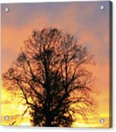 Mighty Oak At Sunset Acrylic Print