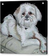 Miki Dog Acrylic Print