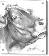 Milk Cow Acrylic Print