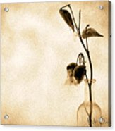 Milk Weed In A Bottle Acrylic Print