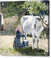 Milking, 19th Century Acrylic Print