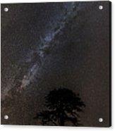 Milky Way And Tree Acrylic Print