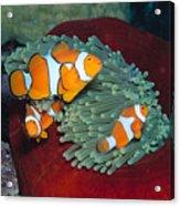Milne Bay, Marine Acrylic Print