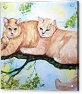 Milo And Timon Acrylic Print