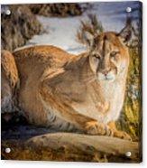 Milo At The Ark Acrylic Print