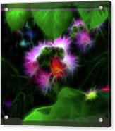 Mimosa Flower Acrylic Print