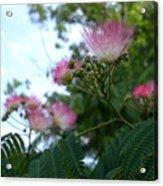 Mimosa Sky Acrylic Print