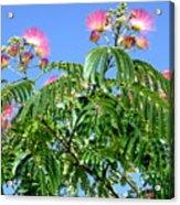 Mimosas In The Sky Acrylic Print