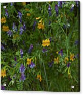 Mimulus And Vetch Acrylic Print
