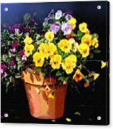Mini Pansy Pot Acrylic Print