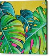 Mini Tropicals 3 Acrylic Print