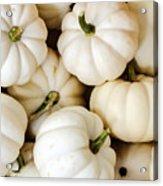 Mini White Pumpkins Acrylic Print