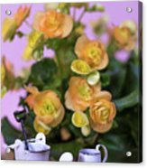 Miniature Gardening Kit With Orange Begonia Background Acrylic Print