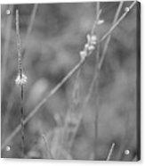 Miniature Wildflower Acrylic Print