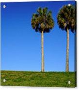 Minimal Palm Trees On A Hill In Saint Augustine Florida Acrylic Print