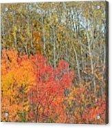 Minnesota Autumn 55 Acrylic Print