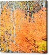 Minnesota Autumn 58 Acrylic Print