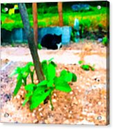 Minnie And The Beanstalk 2 Acrylic Print