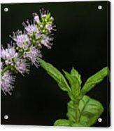 Mint Flower Acrylic Print