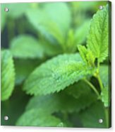 Mint Mood Acrylic Print