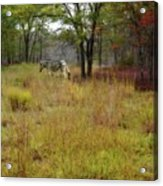 Miracle In The Meadow Acrylic Print
