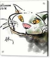 Mirror Cat Acrylic Print