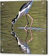 Mirror Image Stilt II Acrylic Print