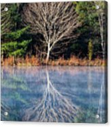 Mirror Mirror On The Pond Acrylic Print