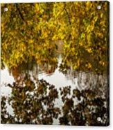 Mirrored Tree Acrylic Print
