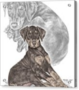 Mischief ... Moi? - Doberman Pinscher Puppy - Color Tinted Acrylic Print by Kelli Swan