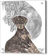 Mischief ... Moi? - Doberman Pinscher Puppy - Color Tinted Acrylic Print