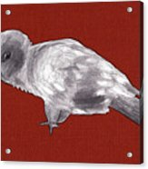 Mischievous Bird Acrylic Print