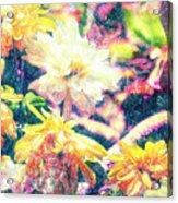 Mission Plants Acrylic Print