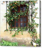 Mission Window With Yellow Flowers Vertical Acrylic Print
