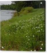 Mississippi River Bank Flowers Acrylic Print