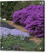 Missouri Botanical Garden Purple Azaleas Dsc01692 Acrylic Print