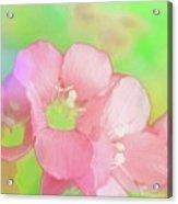 Missouri Wildflowers 5  - Polemonium Reptans -  Digital Paint 7 Acrylic Print