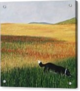 Missy In The Field Acrylic Print