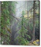 Mist Forest Acrylic Print