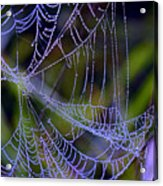 Mist In The Web  Acrylic Print