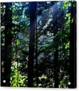 Mist, Leaves And Sunlight Acrylic Print