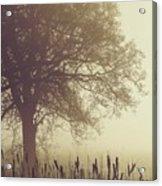 Mist Acrylic Print by Odd Jeppesen
